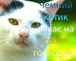 котик шукає господаря